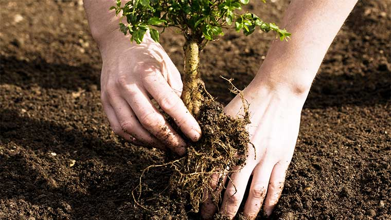 Озеленення важливіше за вирубку!